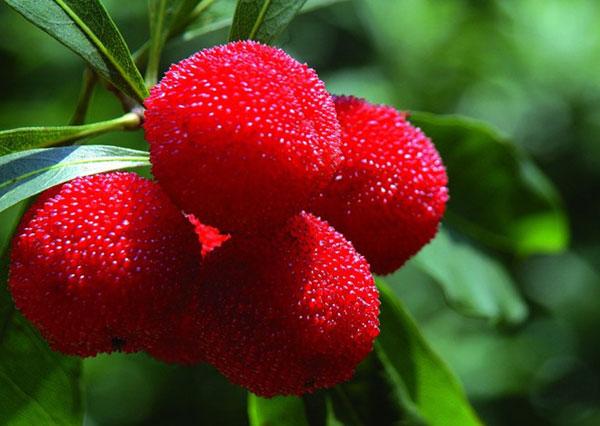 Các loại hoa quả tốt cho điều trị xuất tinh sớm